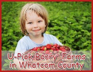 Berry Farms Sticky